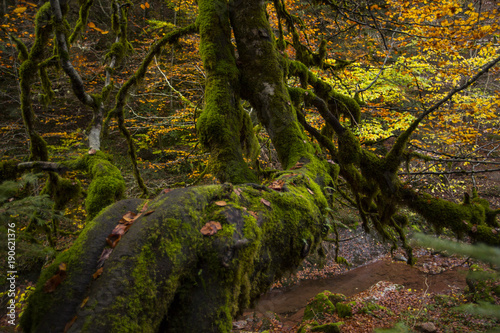 Fotobehang Weg in bos Otoño en los Pirineos