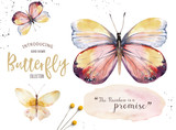 Set of watercolor boho butterfly. Vintage summer isolated spring art. Watercolour illustration. design wedding card, insect, flower beauty banner. Bohemian decoration. - 190638526