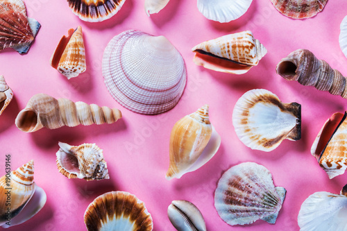 Plakat different sea shells on a pink background