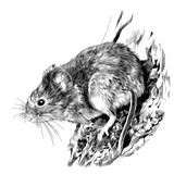 field mouse hanging on a tree trunk, sketch vector graphics monochrome drawing - 190657332