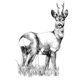 deer stands in the dry grass sketch vector graphics monochrome drawing - 190658551