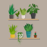 Green indoor house plants in pots on the  wooden shelf