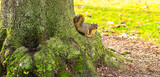 écureuil dans un arbre. - 190663133