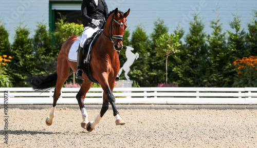 Dressage horse in the test, trot strengthening suspension phase..