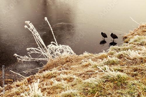 Deurstickers Gras suyun üstünde ördek