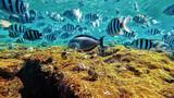 fish underwater world - 190686763