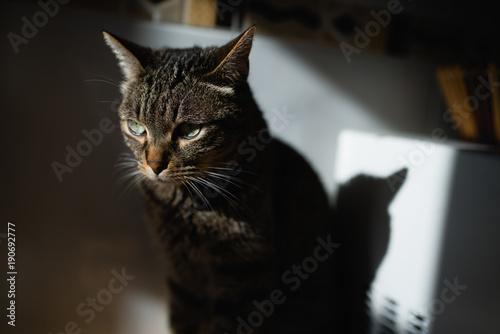 Beautiful tabby cat portrait