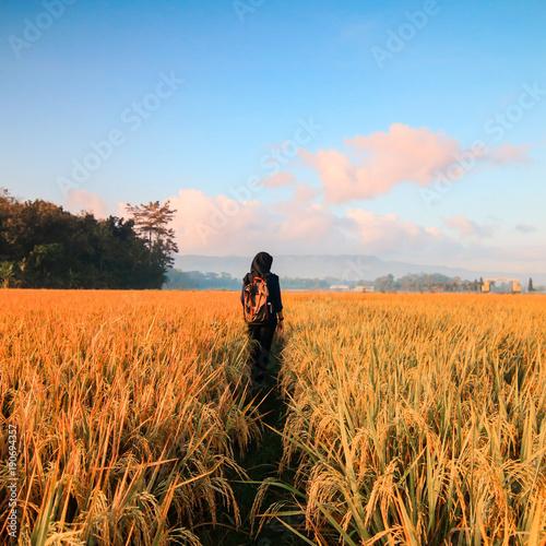 Foto op Aluminium Oranje eclat nature, sky, field, landscape, grass