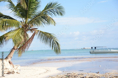 ocean sea summer beach sand palm trees coconuts flora  © Юлия Бурмистрова