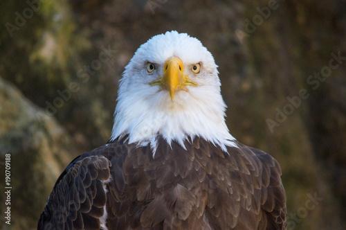 Aluminium Eagle Piercing Stare