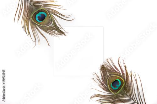 Fotobehang Pauw Peacock Styled Stock