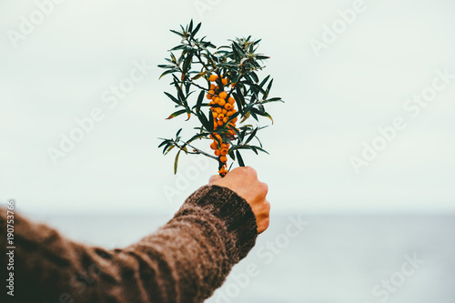 Woman hand holding sea buckthorn  berries outdoor organic food Healthy Lifestyle plant fresh picked