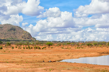 Amazing landscape in the middle of the savannah in the tsavo national park, kenya.