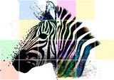Zebra zebrato - 190763908