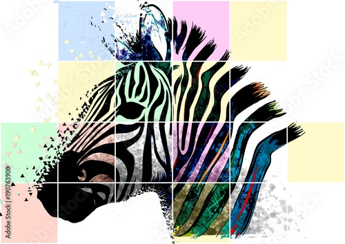 Zebra zebrato