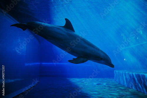 dolphins-swimming-underwater
