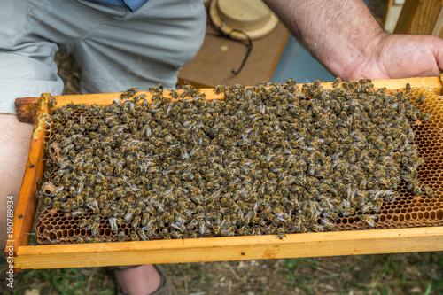 Aluminium Bee Bienen