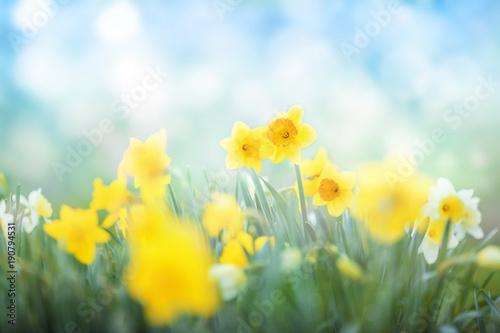 Sticker Spring flowers meadow background