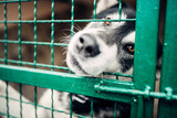 Cute pet face behind bars in veterinary clinic