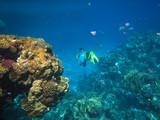 underwater,  deep nature, coral ,  reef, reed sea, ocean , water, scuba, blue, snorkeling