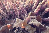 frosted white and purple heathers in the morning cold morning light