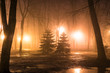 Fog in park at night by the light of street lamps