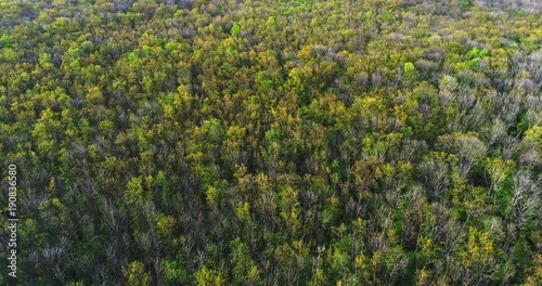 Flying over the coniferous forest in spring