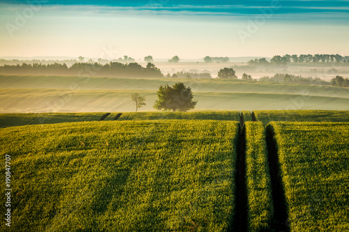 Fotobehang Lente Amazing sunrise at foggy green field in summer, Poland