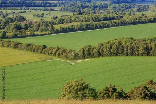 Foto op Canvas Pistache Green Fields