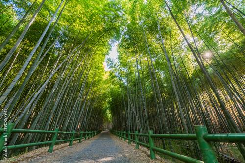 Fotobehang Bamboe 竹林
