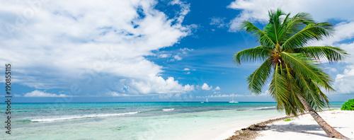 Caribbean palm beach - 190855115