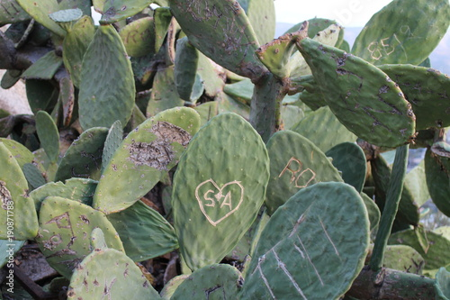 Deurstickers Athene Cactus with writing in park on Likavittos hill, Athens, Greece