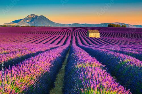 Zdjęcia na płótnie, fototapety na wymiar, obrazy na ścianę : Breathtaking nature landscape with lavender fields in Provence, Valensole, France