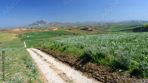 Fotobehang Olijf Krajobraz Sycylii