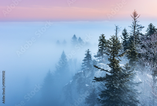 Tuinposter Blauwe hemel Misty mountain forest landscape in the morning, Poland