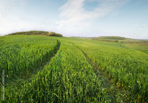 Field and sky in the summer time. Agricultural landscape