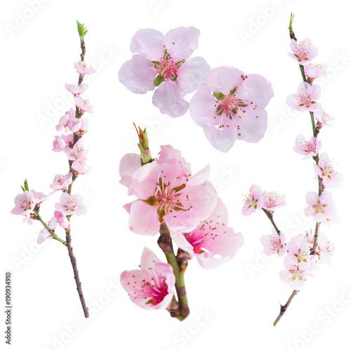 Fototapeta Pink cherry blossom