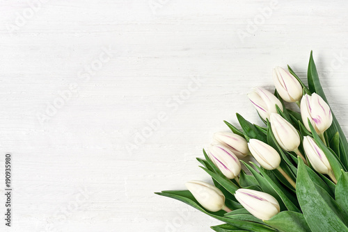 Fototapeta White tulips bouquet on white wooden background. Copy space, top view