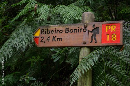 Fotobehang Weg in bos Königslevada Levada do Rei Madeira Portugal