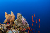 stunning coral reefs that are home to an abundance of marine life thrive beneath the Caribbean sea. This hard and soft coral landscape is typical for the warm tropical waters of Grand Cayman