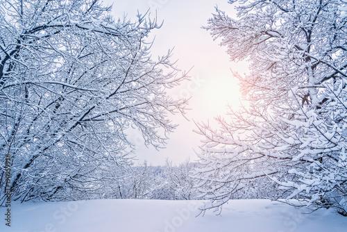 Trees under the snow.