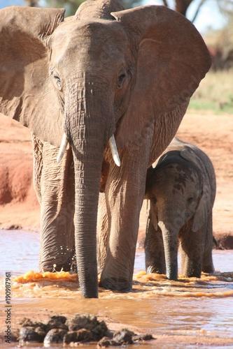 elephant, africa, animal, african, wildlife