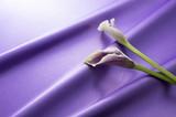 紫色のサテンと紫色のカラー - 190988534