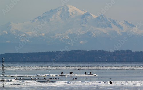 Aluminium Eagle Bald Eagles On Ice