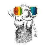 Vector sketch of camel with glasses. Retro illustration - 190992599