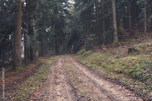 Fotobehang Weg in bos Chemin forestier