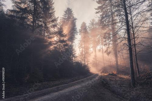 Foto op Canvas Zalm Rayons de soleil transperçant la forêt