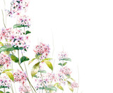 watercolor painting of leaves and flower, on white background - 191000532