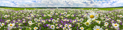 Fotobehang Lente spring landscape panorama with flowering flowers on meadow