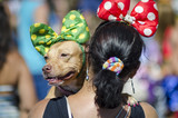 A dog wearing a polka-dot bow at a carnival party for pets in Rio de Janeiro, Brazil  - 191016736